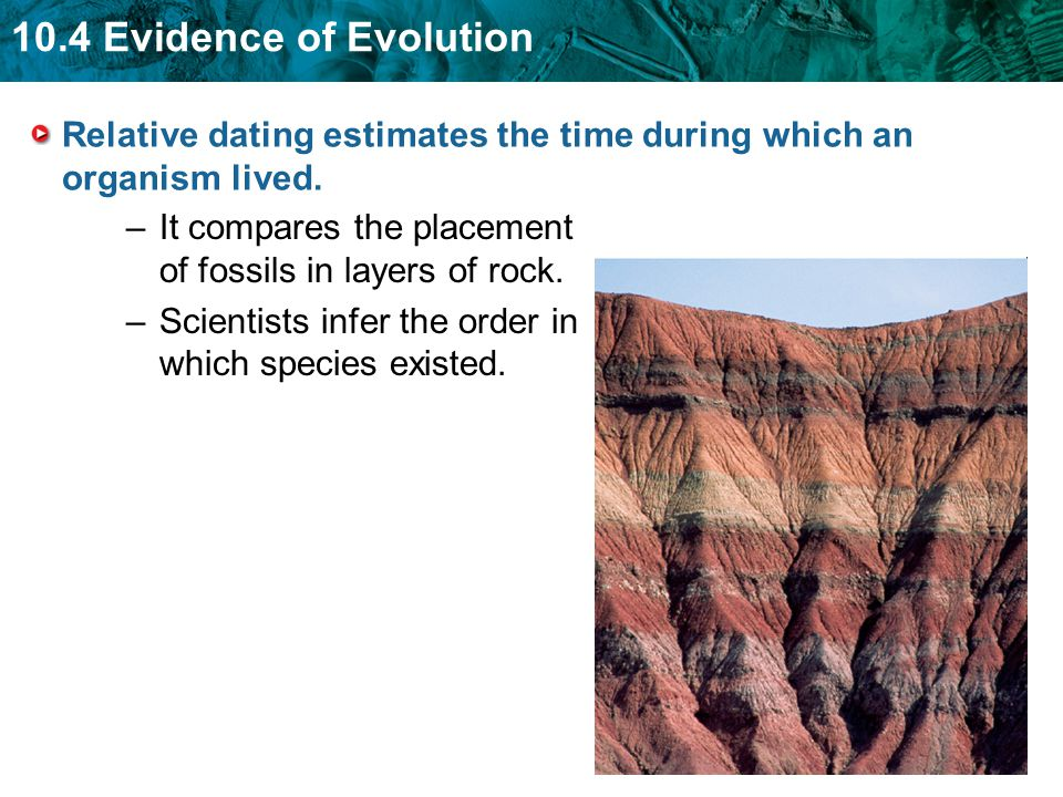Relative dating estimates the time during which an organism lived.