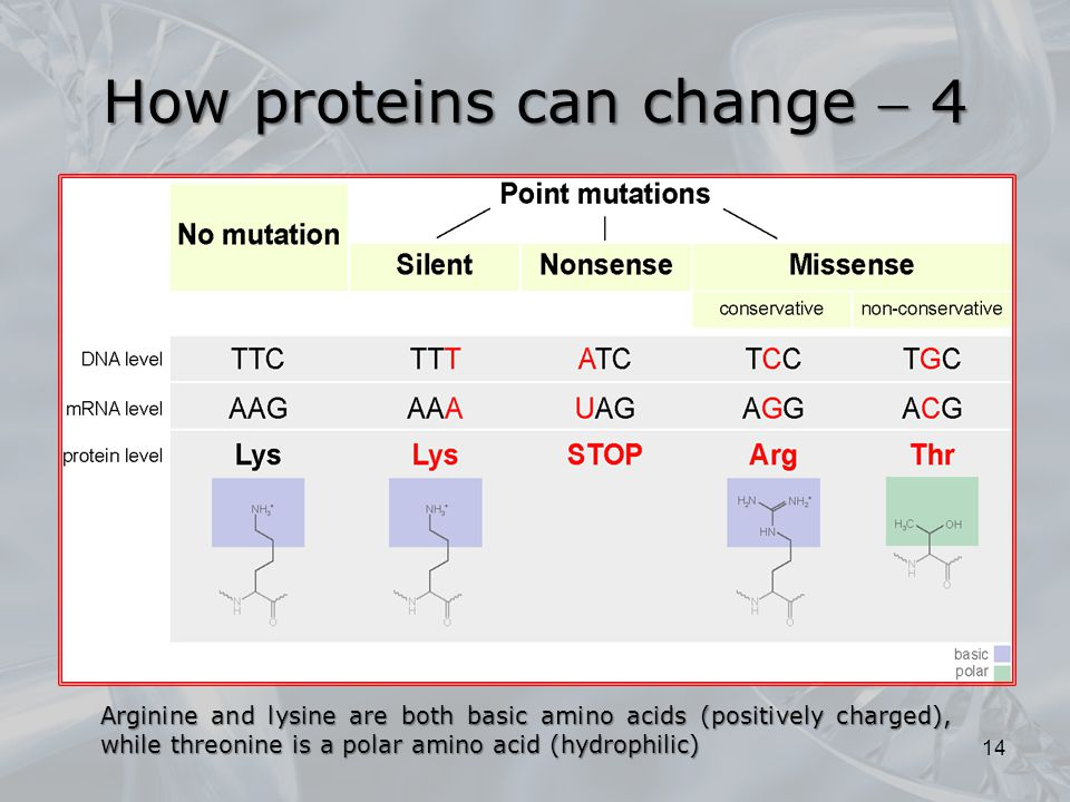 How proteins can change  4