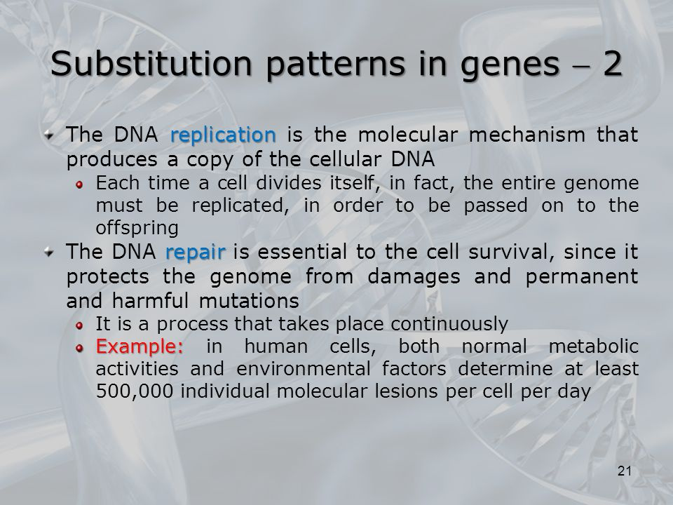 Substitution patterns in genes  2
