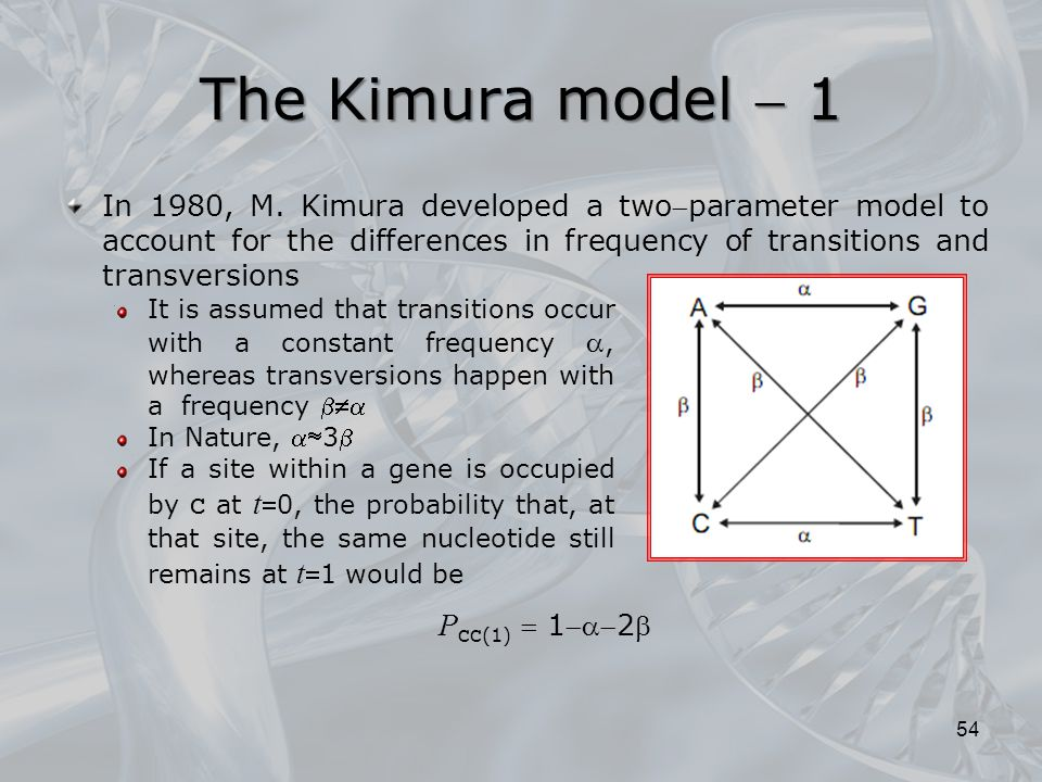 The Kimura model  1 In 1980, M. Kimura developed a twoparameter model to account for the differences in frequency of transitions and transversions.