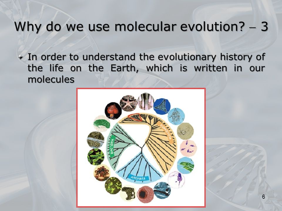 Why do we use molecular evolution  3