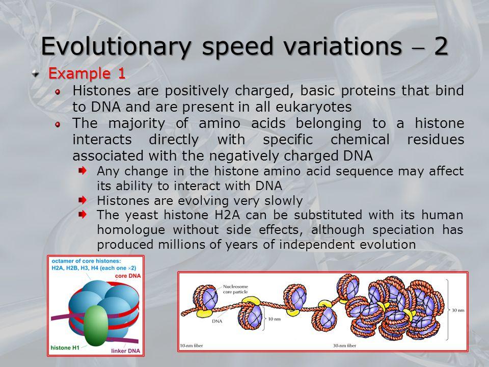 Evolutionary speed variations  2