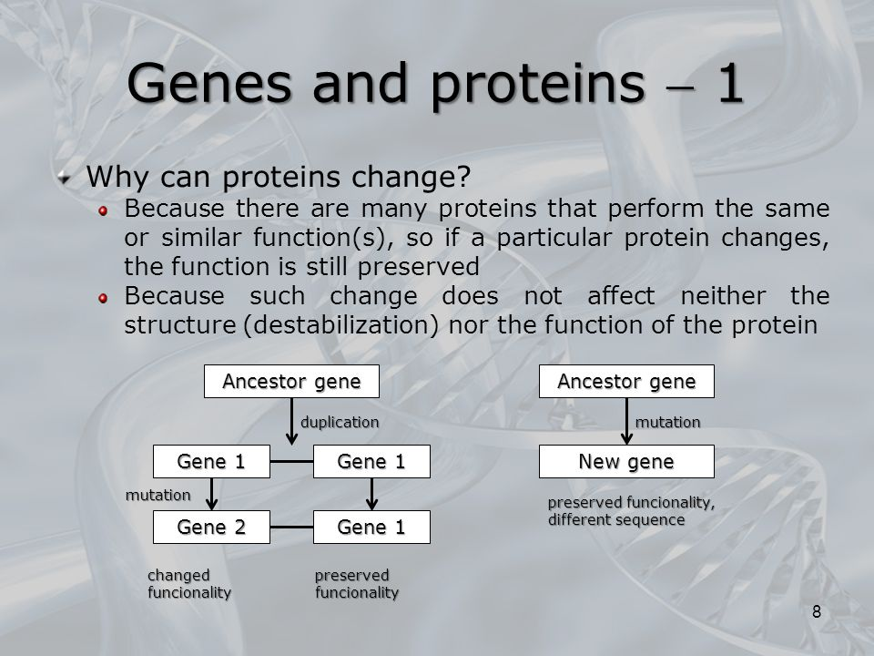 Genes and proteins  1 Why can proteins change