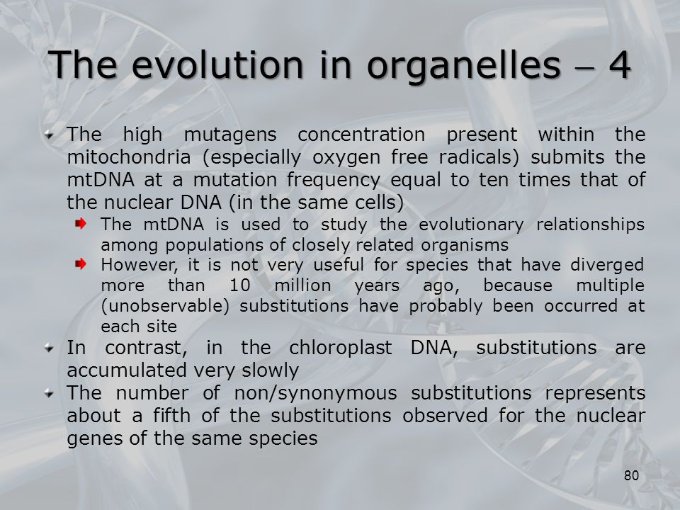 The evolution in organelles  4