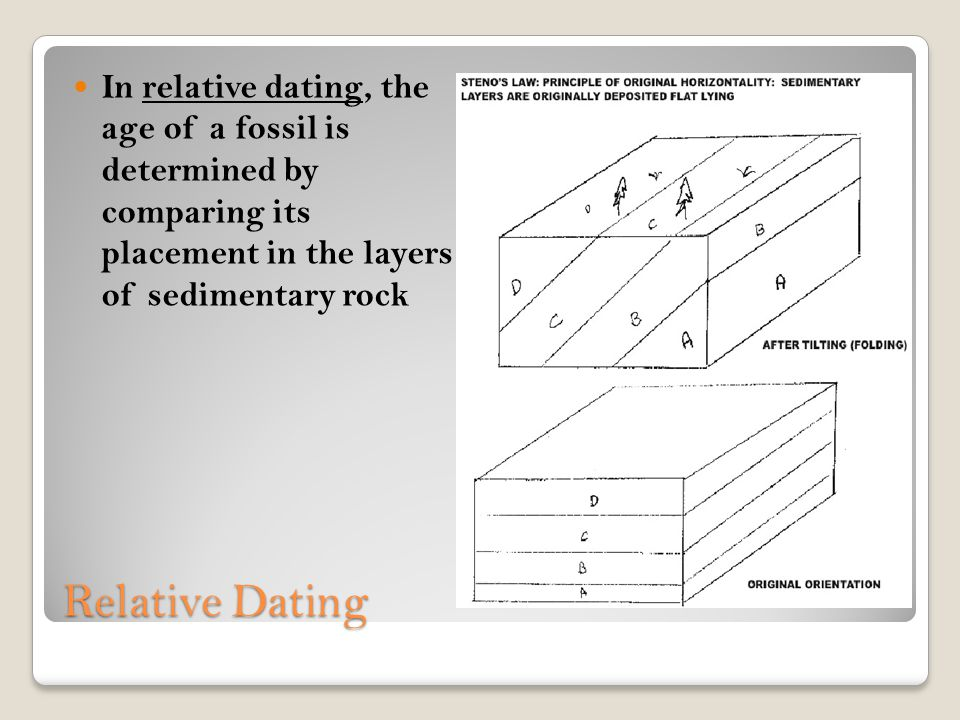 In relative dating, the age of a fossil is determined by comparing its placement in the layers of sedimentary rock