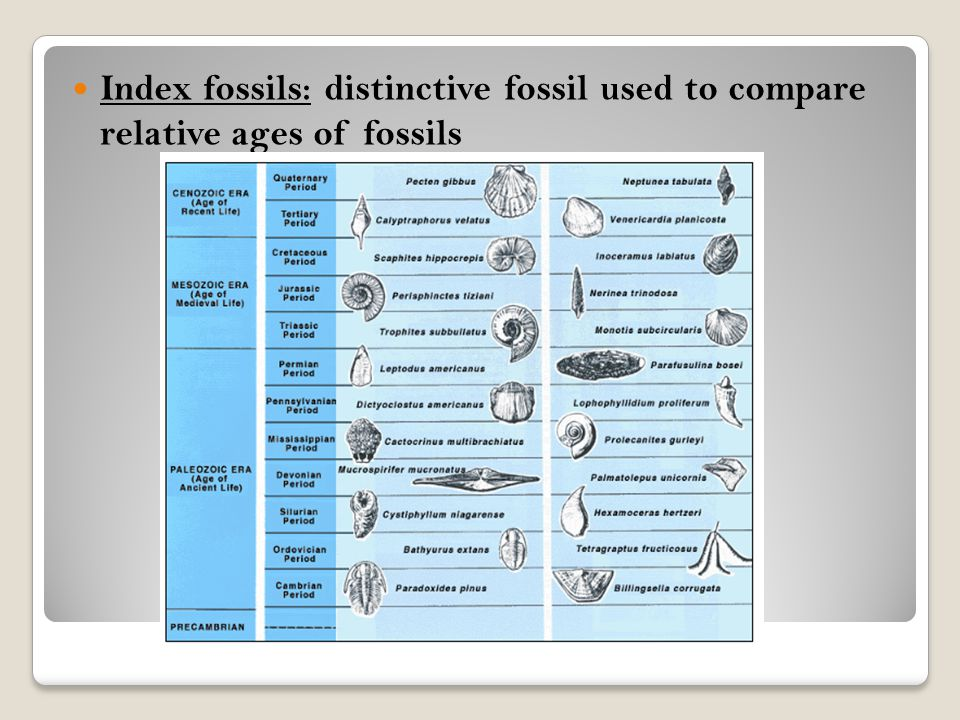 Index fossils: distinctive fossil used to compare relative ages of fossils
