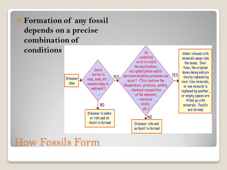 Formation of any fossil depends on a precise combination of conditions
