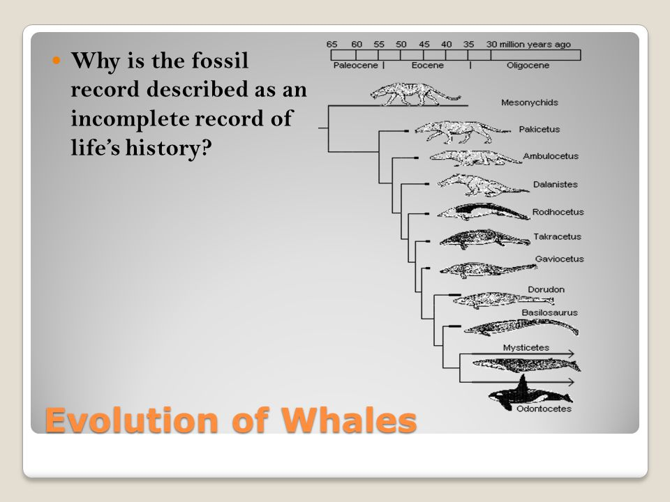 Why is the fossil record described as an incomplete record of life's history