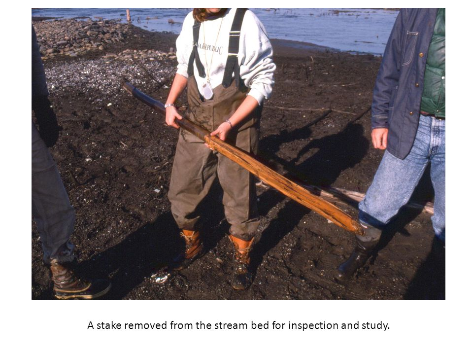 A stake removed from the stream bed for inspection and study.