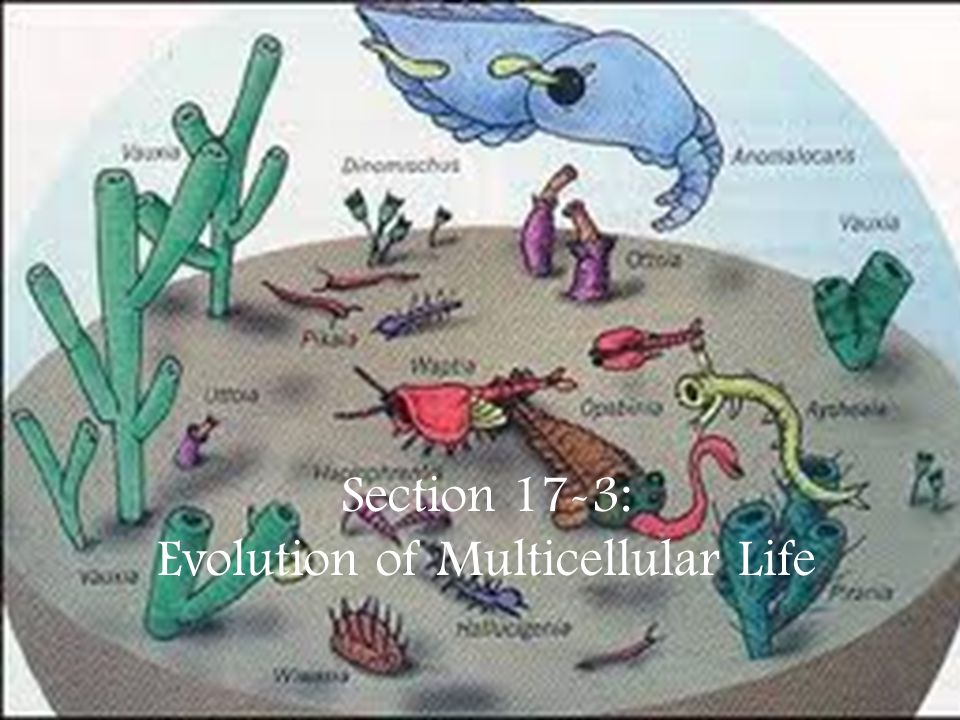 Evolution of Multicellular Life
