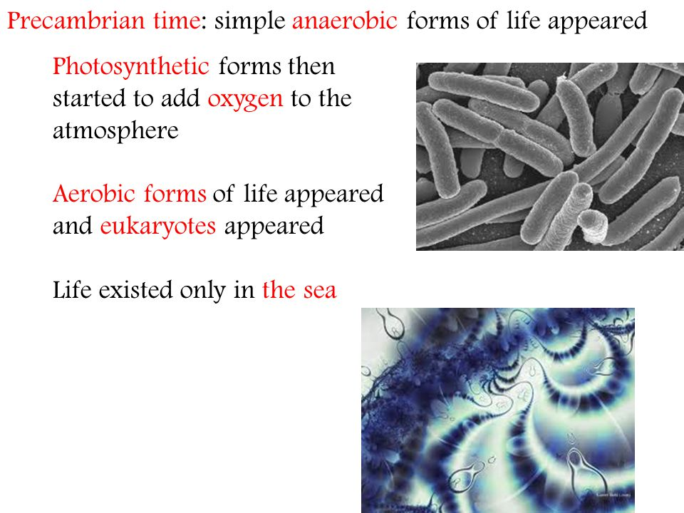 Precambrian time: simple anaerobic forms of life appeared