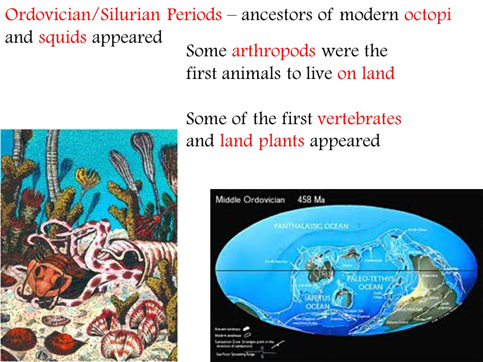 Ordovician/Silurian Periods – ancestors of modern octopi and squids appeared