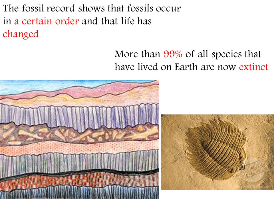 The fossil record shows that fossils occur in a certain order and that life has changed