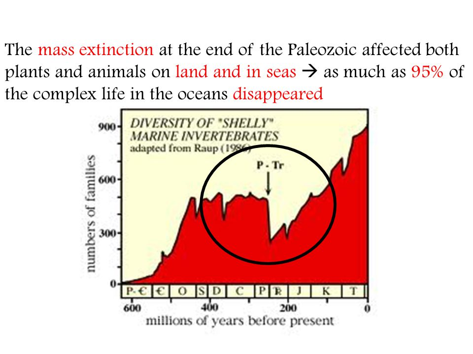The mass extinction at the end of the Paleozoic affected both plants and animals on land and in seas  as much as 95% of the complex life in the oceans disappeared