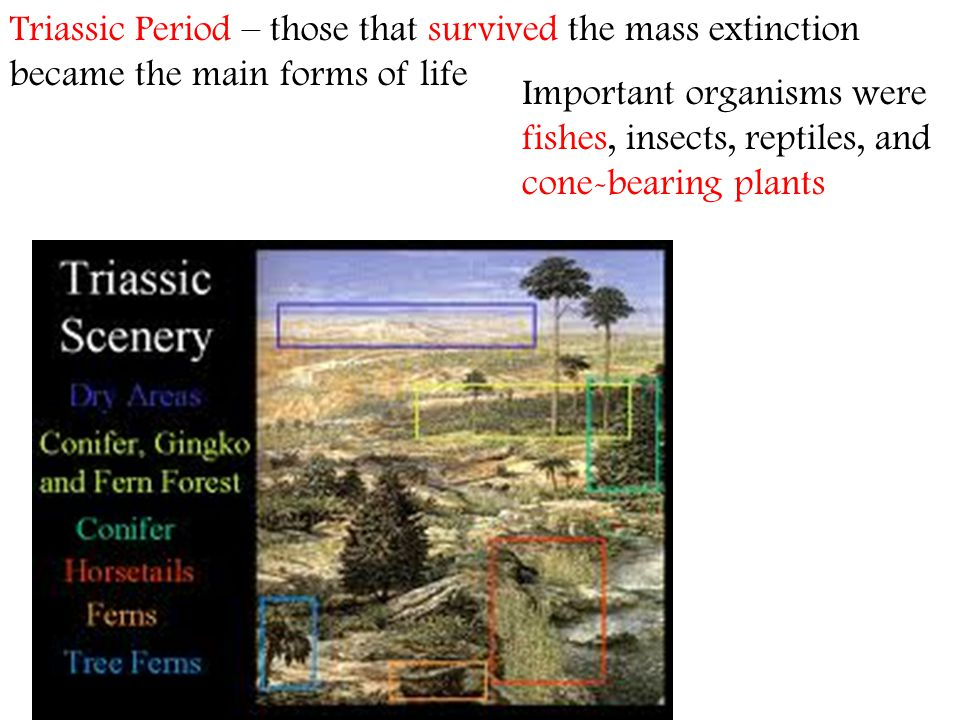 Triassic Period – those that survived the mass extinction became the main forms of life