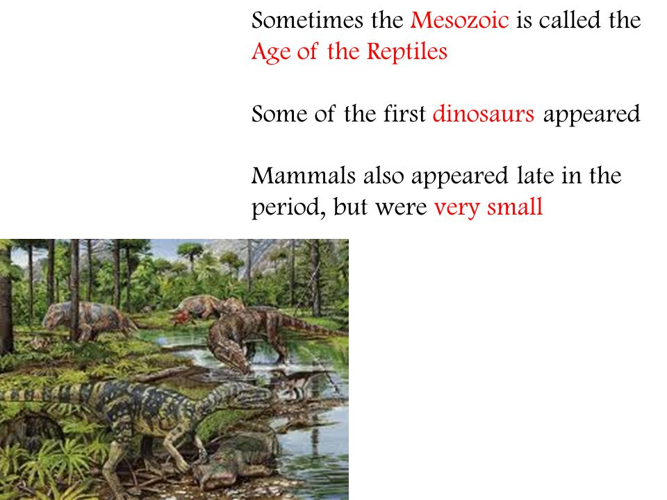 Sometimes the Mesozoic is called the Age of the Reptiles