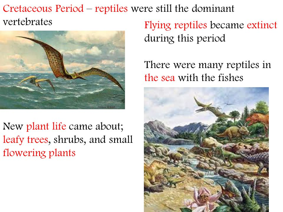 Cretaceous Period – reptiles were still the dominant vertebrates