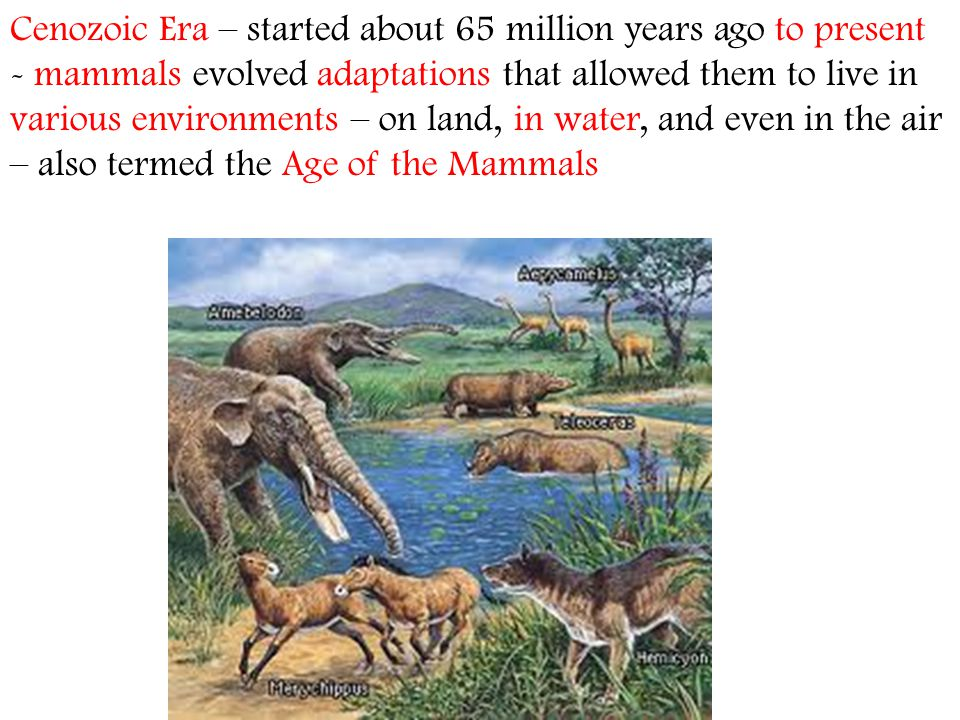 Cenozoic Era – started about 65 million years ago to present - mammals evolved adaptations that allowed them to live in various environments – on land, in water, and even in the air – also termed the Age of the Mammals