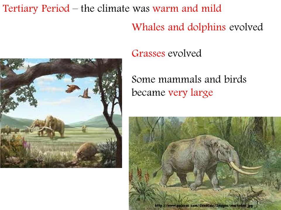 Tertiary Period – the climate was warm and mild