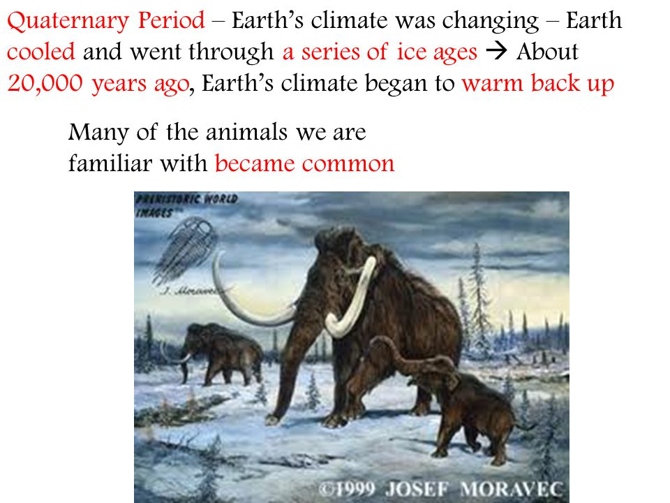 Quaternary Period – Earth's climate was changing – Earth cooled and went through a series of ice ages  About 20,000 years ago, Earth's climate began to warm back up