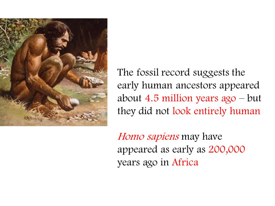The fossil record suggests the early human ancestors appeared about 4