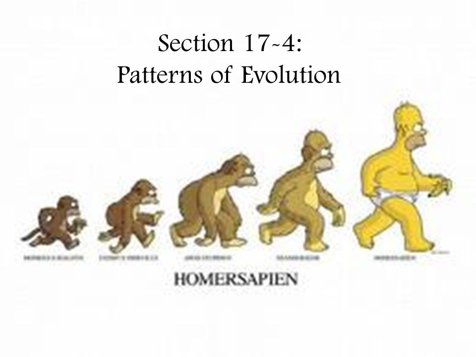 Section 17-4: Patterns of Evolution