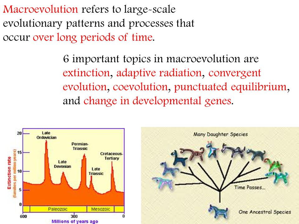 Macroevolution refers to large-scale evolutionary patterns and processes that occur over long periods of time.