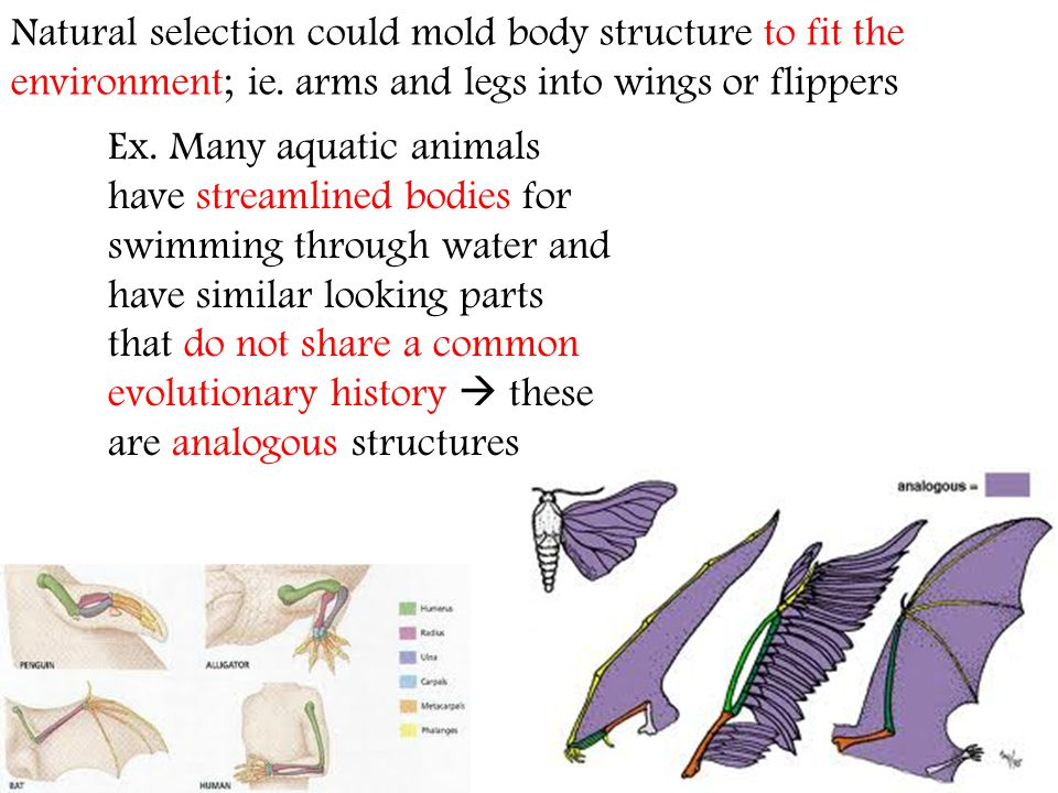 Natural selection could mold body structure to fit the environment; ie