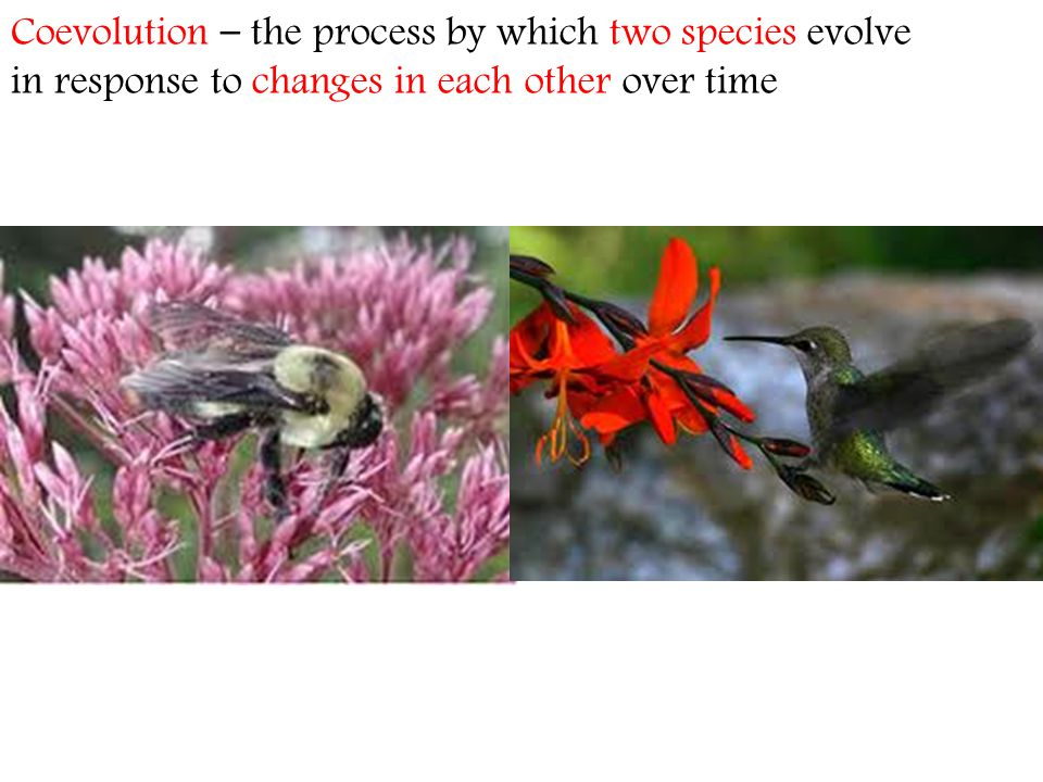Coevolution – the process by which two species evolve in response to changes in each other over time