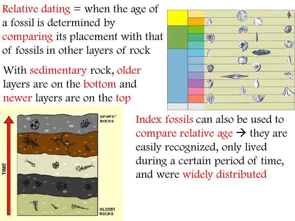 Relative dating = when the age of a fossil is determined by comparing its placement with that of fossils in other layers of rock