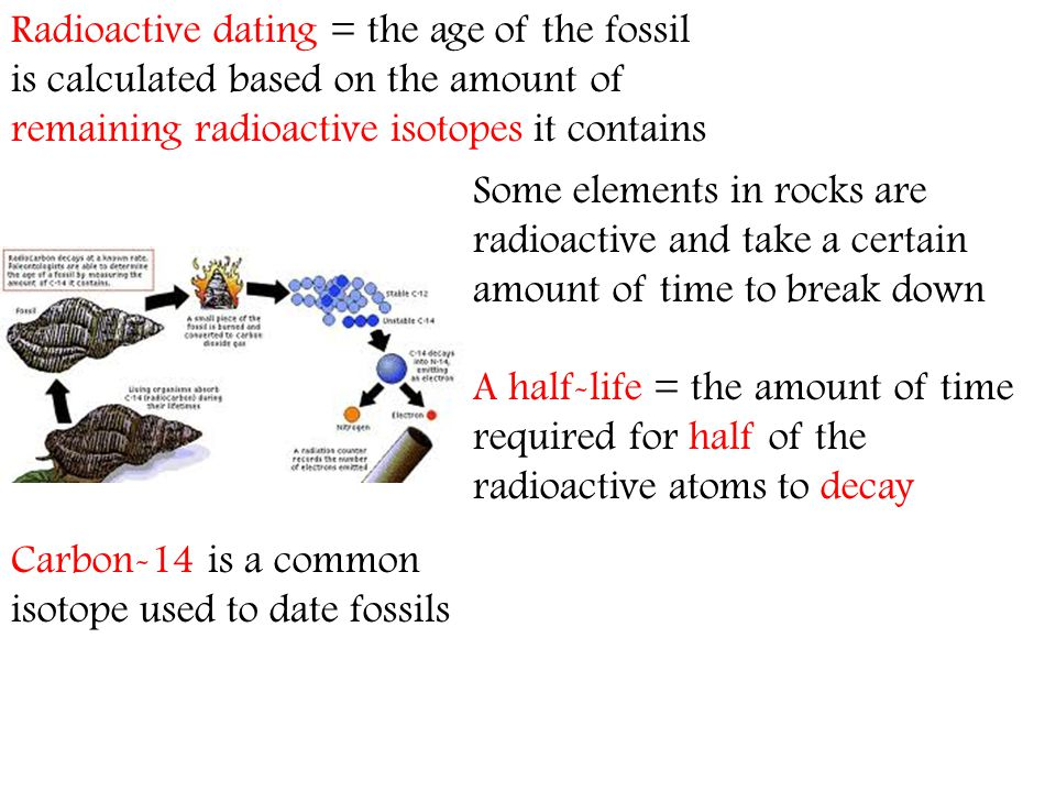Radioactive dating = the age of the fossil is calculated based on the amount of remaining radioactive isotopes it contains