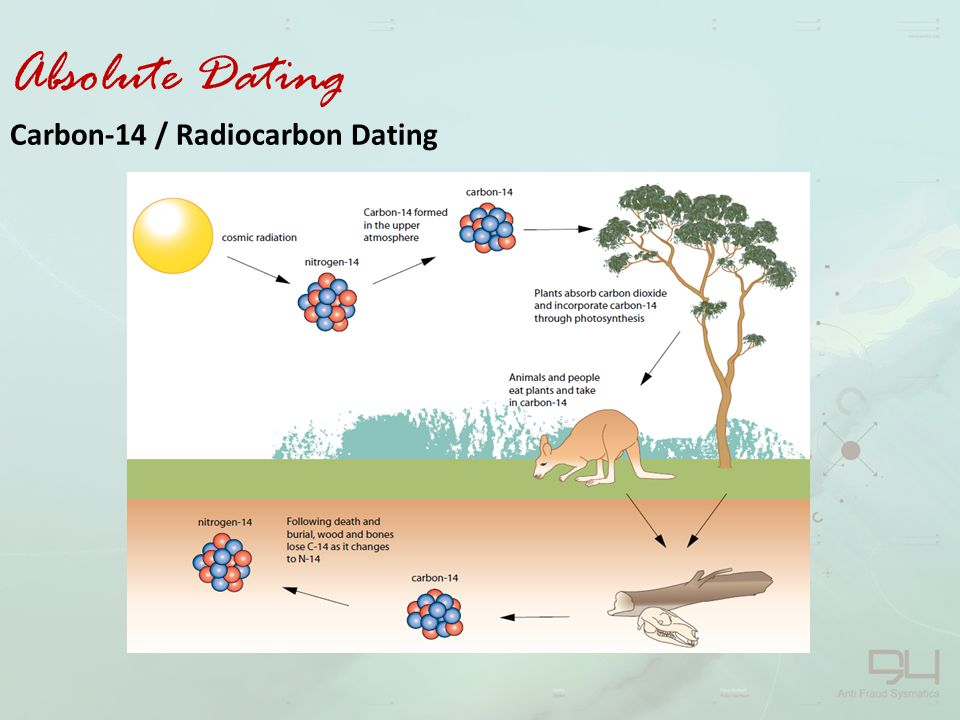 stratigraphy and radio carbon dating 14
