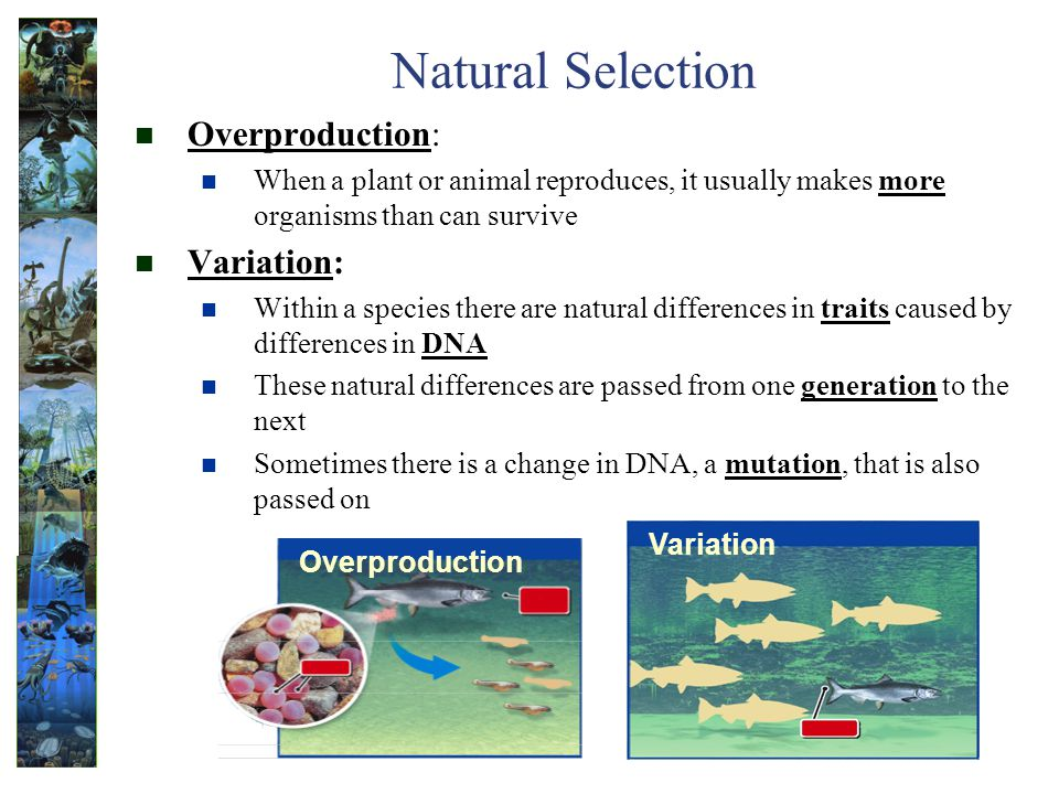 Natural Selection Overproduction: Variation: