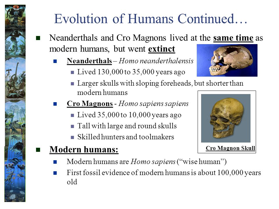 Evolution of Humans Continued…