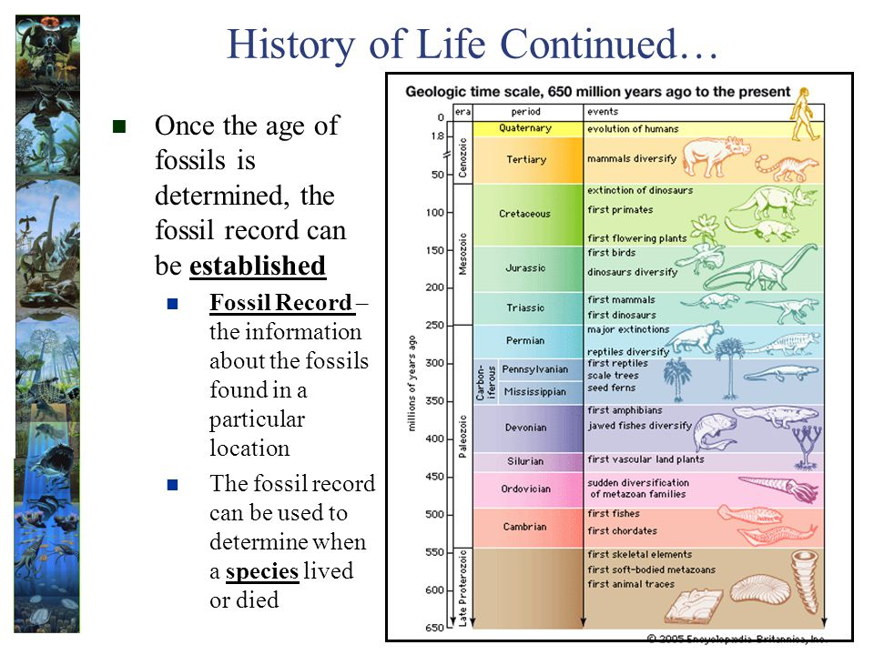 History of Life Continued…