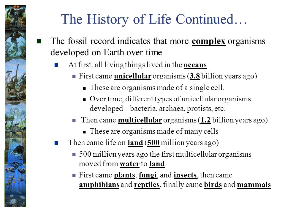 The History of Life Continued…