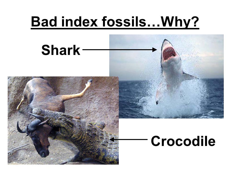 Bad index fossils…Why Shark Crocodile