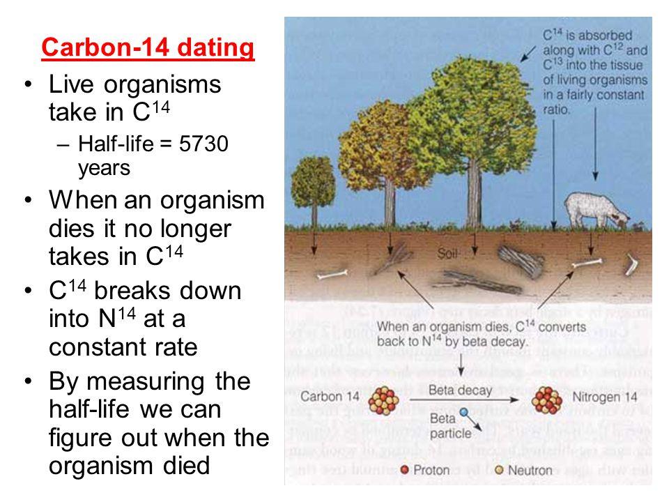 Live organisms take in C14