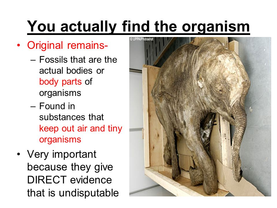 You actually find the organism