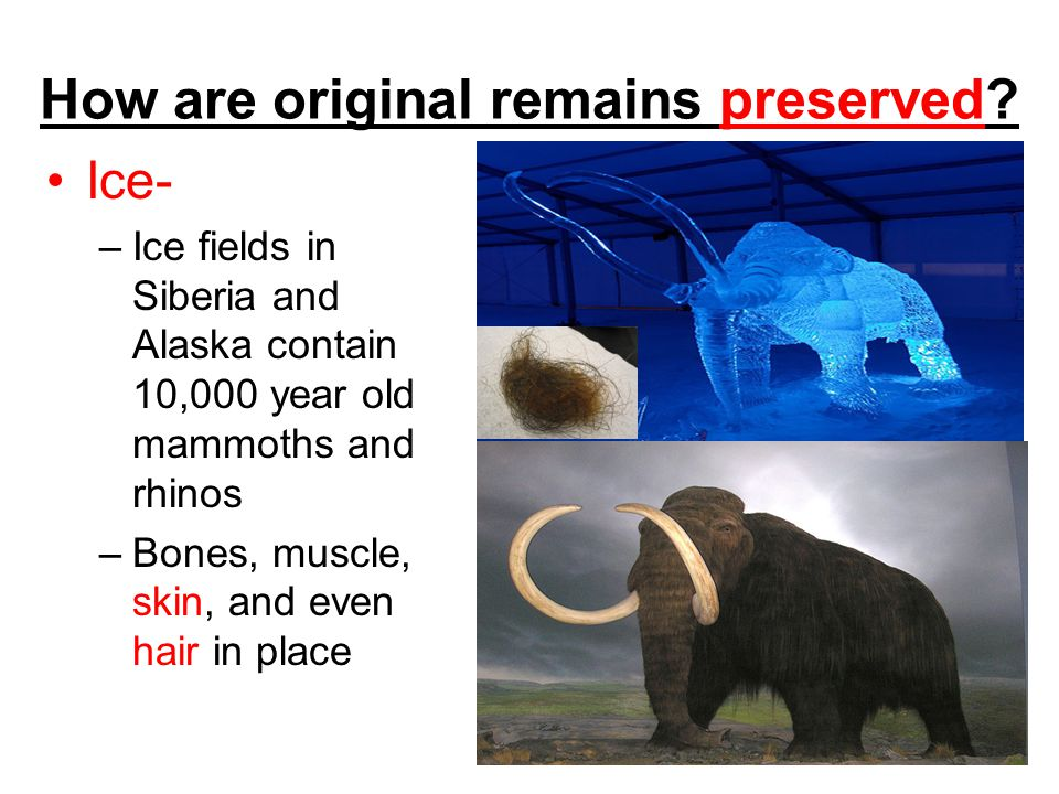 How are original remains preserved