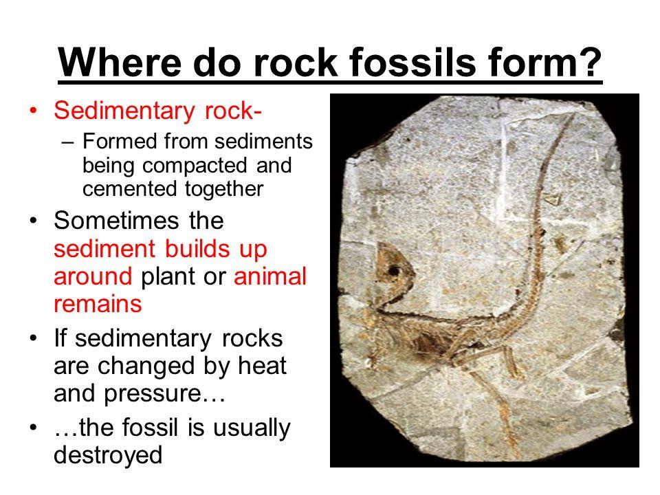 Where do rock fossils form