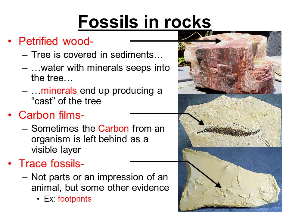 Fossils in rocks Petrified wood- Carbon films- Trace fossils-