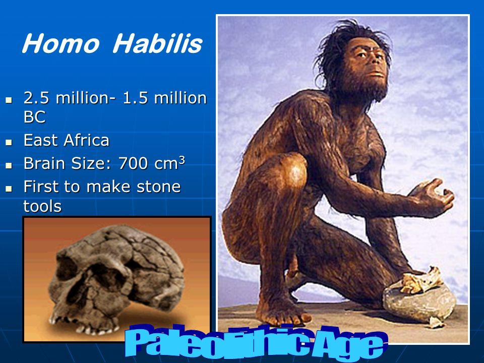 Homo Habilis Paleolithic Age 2.5 million- 1.5 million BC East Africa