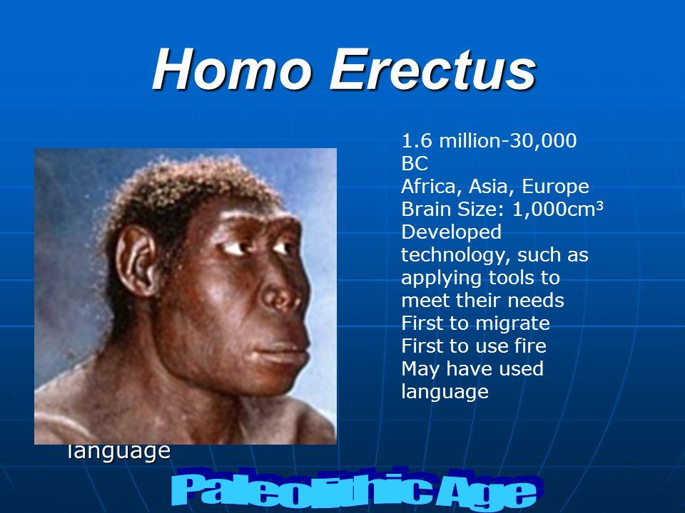 Homo Erectus Paleolithic Age 1.6 million-30,000 BC