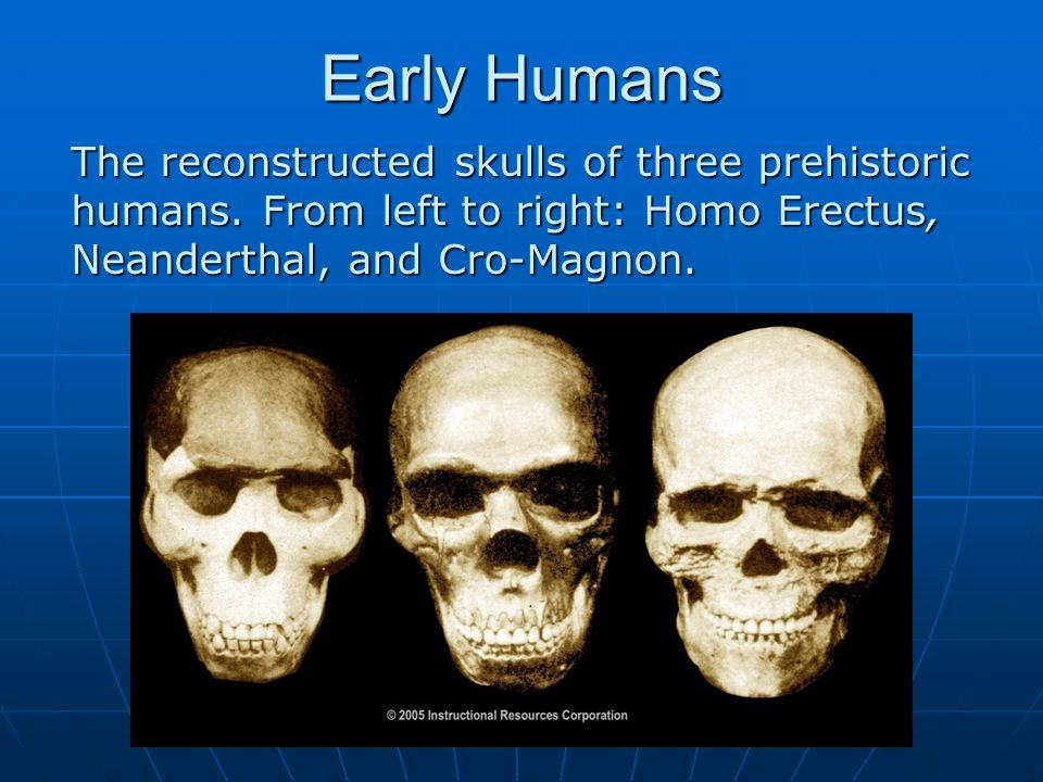 Early Humans The reconstructed skulls of three prehistoric humans.