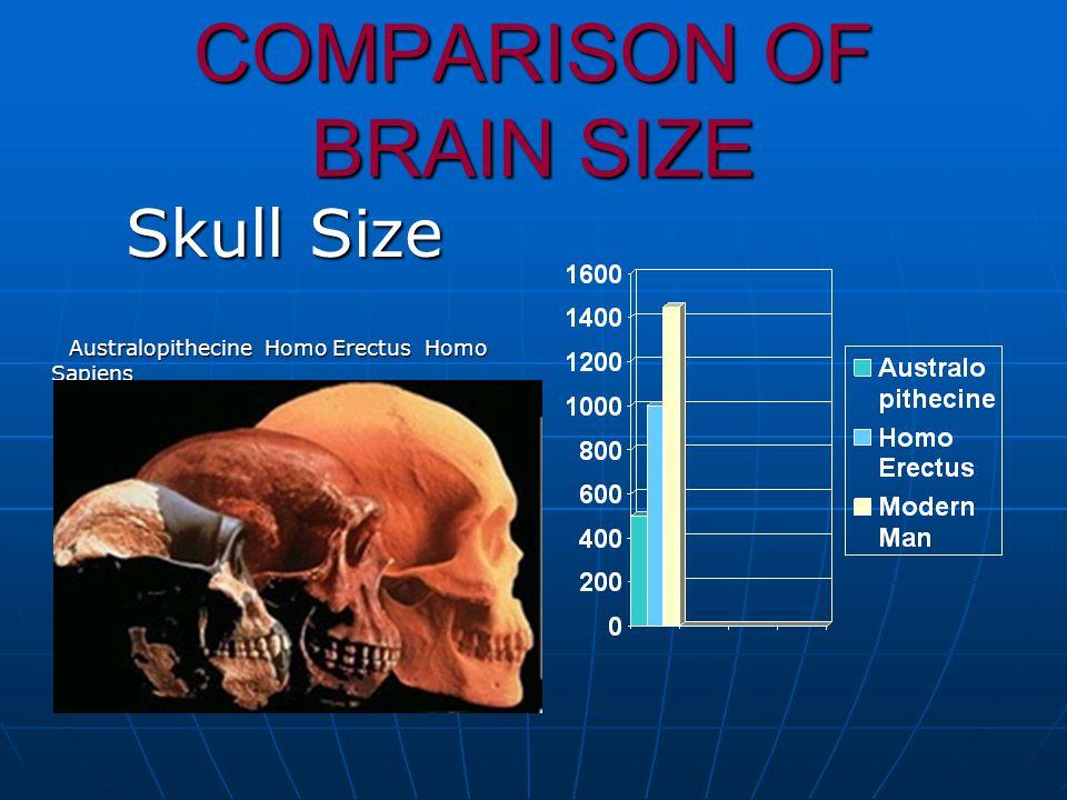 COMPARISON OF BRAIN SIZE