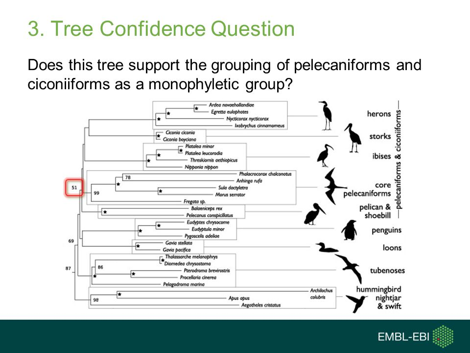 3. Tree Confidence Question