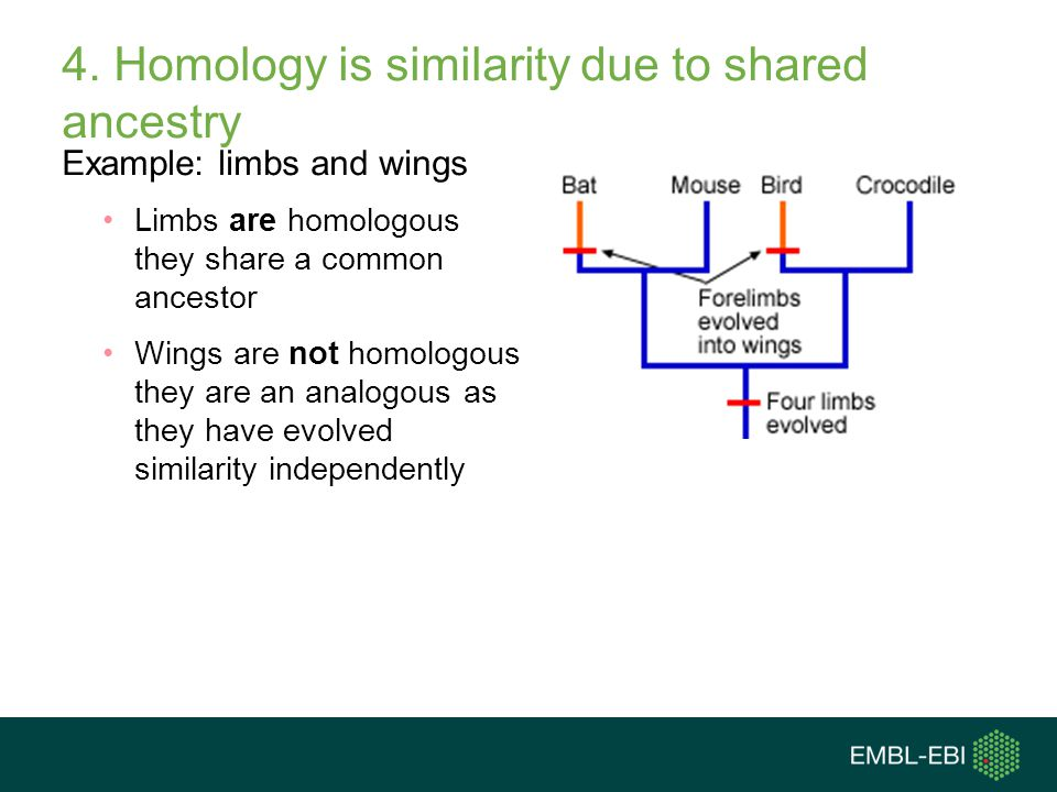4. Homology is similarity due to shared ancestry