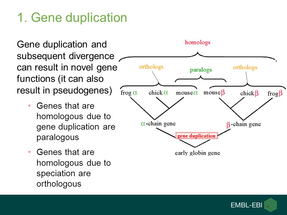 1. Gene duplication Gene duplication and subsequent divergence can result in novel gene functions (it can also result in pseudogenes)