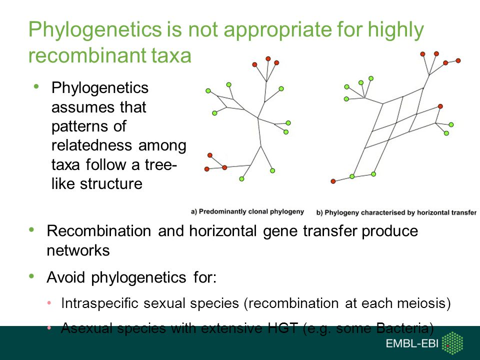 Phylogenetics is not appropriate for highly recombinant taxa